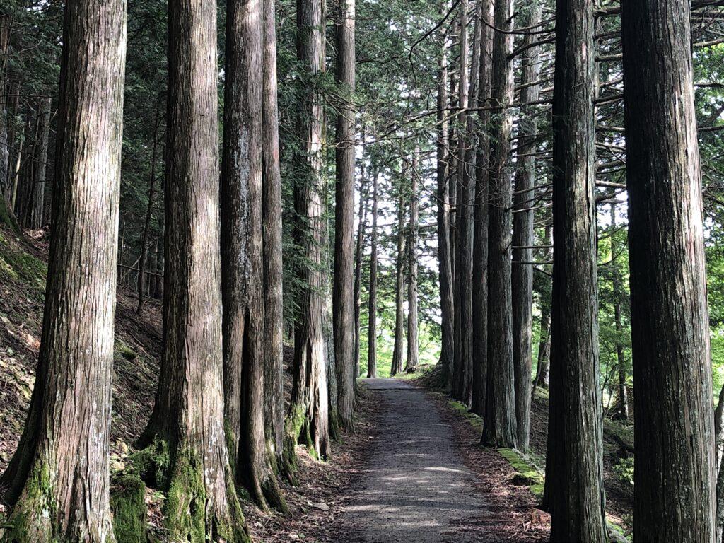 妙法ヶ岳 標高1329m 三峯神社 奥宮 登山道