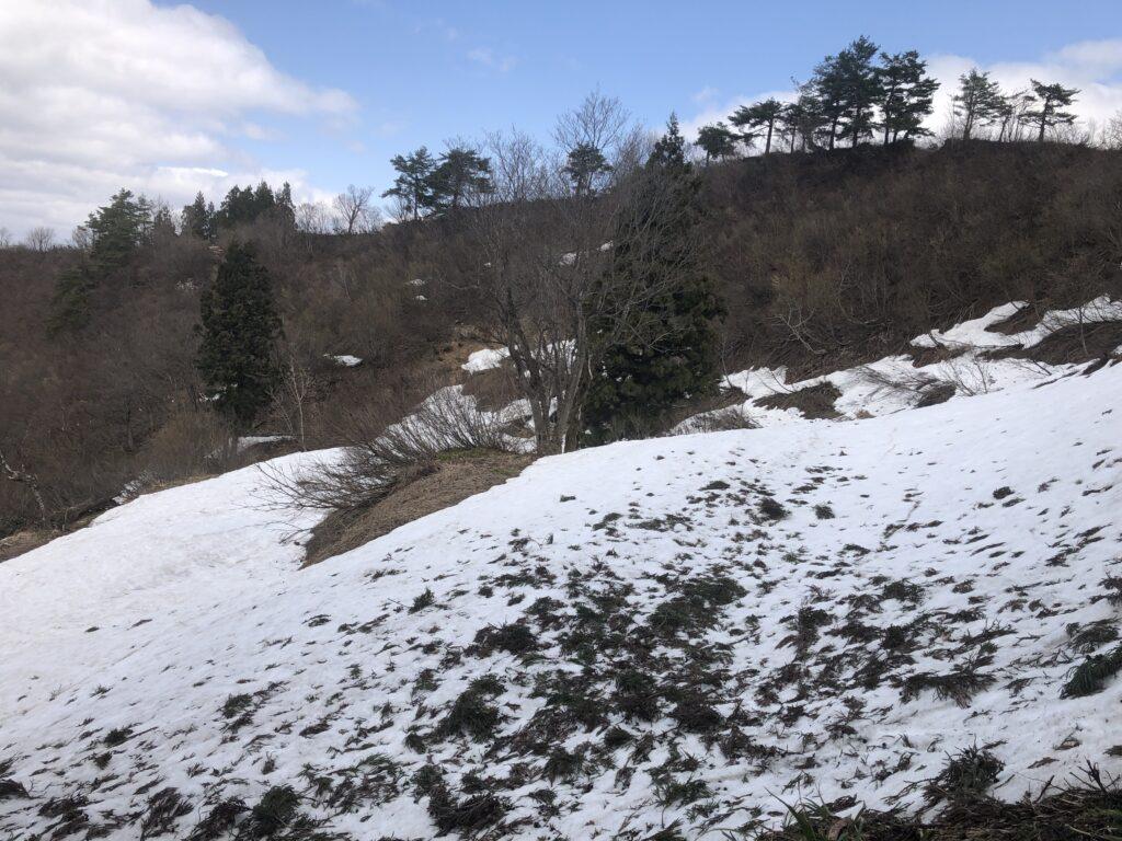 潟県南魚沼市 坂戸山 かたくり群生地 登山 城坂コース 桃の木平